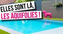 Aquifolies_Aquilus Valence